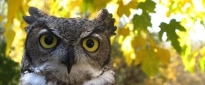 face-of-a-wise-owl